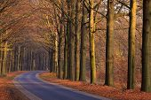 Road With Trees In Autumn