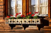 Typical Red Geranium Flowers In The Windows Of Traditional Alpine Wooden Chalets. Bavarian Wooden Hu poster