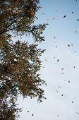 Reserva de Biosfera da Borboleta monarca, Michoacán (México)