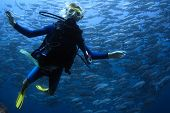 Underwater shoot of a young lady diving with scuba in a clear sea with swirling school of Jack fish on the background