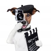 Movie Director Dog