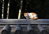 Stray Cat In Kyoto