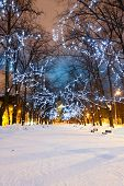 Illuminated Snowy Avenue At Night