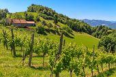 Tuscany Estiria viñedo cerca de Leutschach, Styria, Austria
