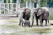 Lowry Park Zoo Baby Elephant