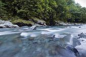 Rio fluindo e floresta, Nova Zelândia