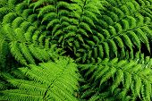 Fern tree, New Zealand