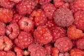 raspberries, background