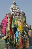 Colorfully Decorated Elephant