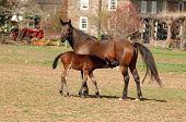 Horse Nursing
