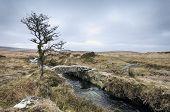 Darmoor Stream