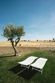 Country Tourism Lounge Chairs and Tree Portrait