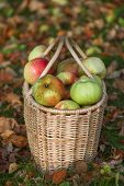 Red And Yellow Apples In Basket