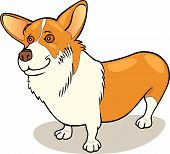 Dog Breeds Pembroke Welsh Corgi