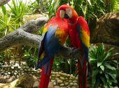 Two Parrots -  Close Up