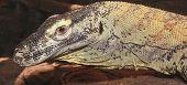 A Close Up Of A Komodo Dragon