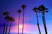 California high palm trees purple sunset sky silhouette background USA