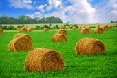 Agricultural landscape of hay bales in a field
