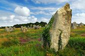 Green vines on prehistoric megalithic monuments menhirs in Carnac area in Brittany, France