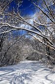 Recreational path in winter forest after a snowfall