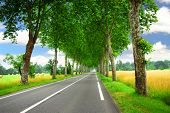 Country road lined with sycamore trees in southern France
