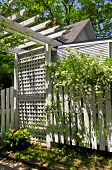 White trellis and fence with flowering bridal wreath shrub in a garden