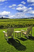 Muskoka chairs and table near vineyard under blue sky