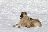 Dog Resting In Snowy Ski Slope