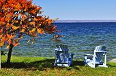 Wooden muskoka chairs under fall tree at lake