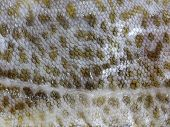 stock photo of fish skin  - background cod fish skin with scales texture - JPG