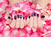 Woman With Beautiful Nails Holding Petals