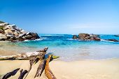 stock photo of driftwood  - Beach and driftwood in Tayrona National Park near Santa Marta Colombia - JPG