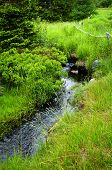 Small stream among fresh green summer forest in Newfoundland
