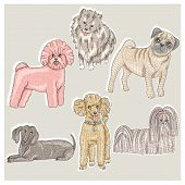 Set Of Cute Little Breed Dogs. Bichon, Pug, Spitz, Dachshund, Poodle, Shih Tzu.