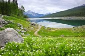 Wildflowers on the shore of Medicine Lake in Jasper National Park,  Canada