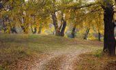 Herbstliche Holz