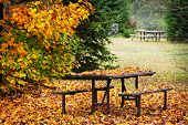 Picnic table covered with colorful fall leaves, Algonquin Park, Canada.