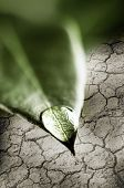 Fresh water drop on tip of green leaf above dry cracked soil