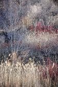 Natural background of dry grasses and bare trees in brown winter woodland with subdued colors