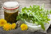 picture of edible  - Foraged edible dandelions flowers and greens with jar of dandelion preserve - JPG