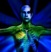 X Ray Man Torso