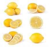 lemon fruit on a white background