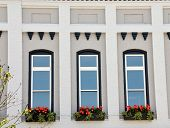 Arched Windows With Flowers At Base