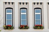 Arched Windows With Flowers