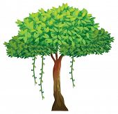 Illustration of a single tree with vines