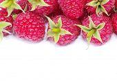 fresh raspberry closeup isolated on white background