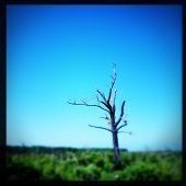 Instagram filtered image of a dead tree protruding from a swam marsh