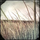 Instagram filtered image of tall grass in a swamp marsh