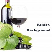 Winery Background. Red Wine With Fresh Ripe Grapes Isolated On White Background.
