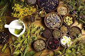picture of century plant  - Natural medicine - JPG